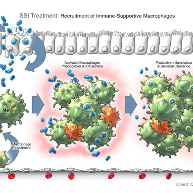 M1 Macrophage Recruitment and Bacterial Clearance (Qu Biologics Inc.)