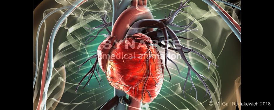 cardiology rudakewich